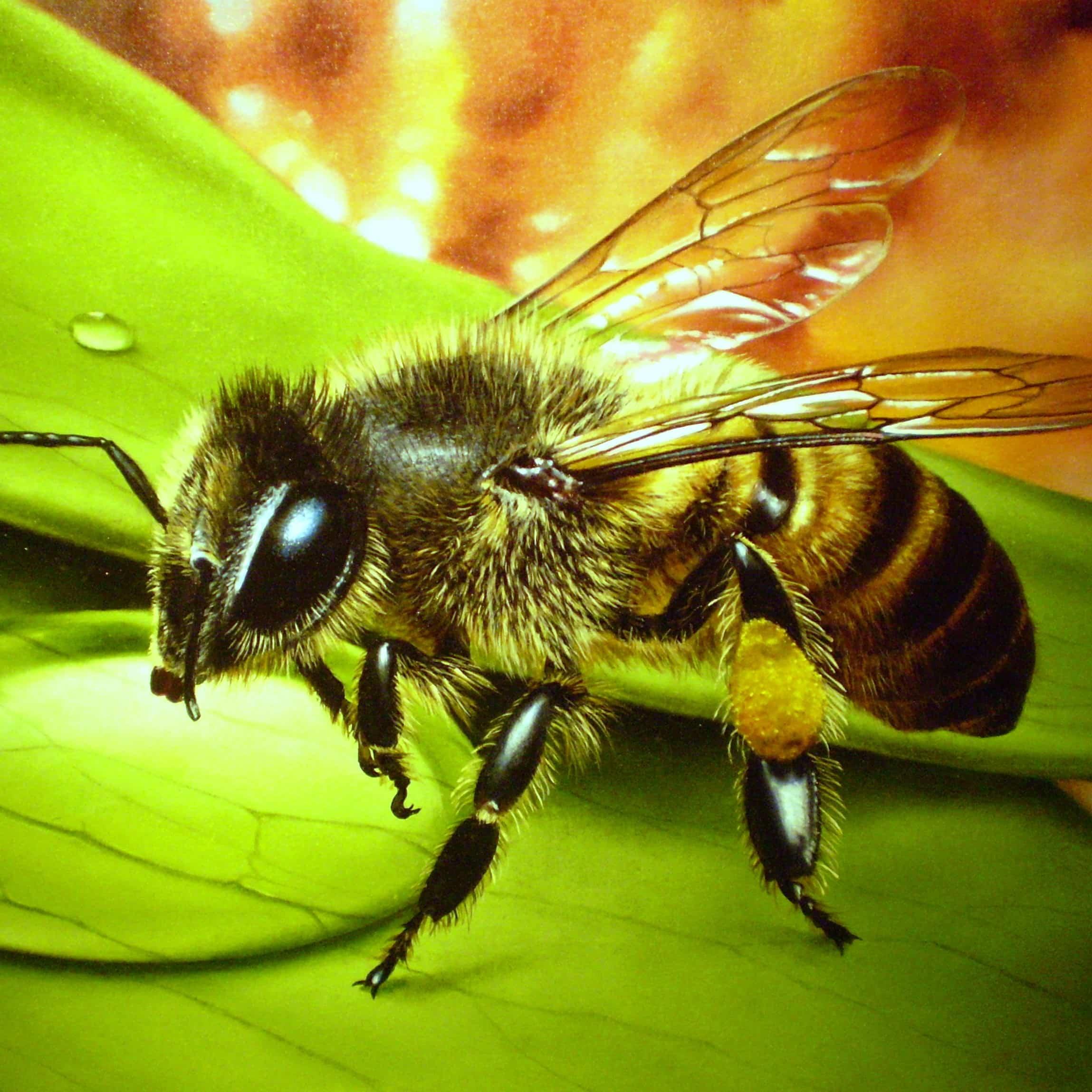 Природное лечение артрита и ревматизма пчелами