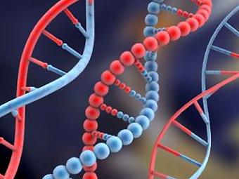 ДНК-тест на определение отцовства в Павлодаре